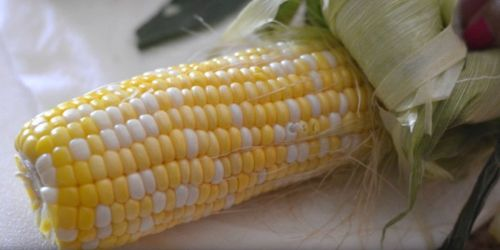 Corn on the Cob: How to Shuck & Cook in Under 5 Minutes