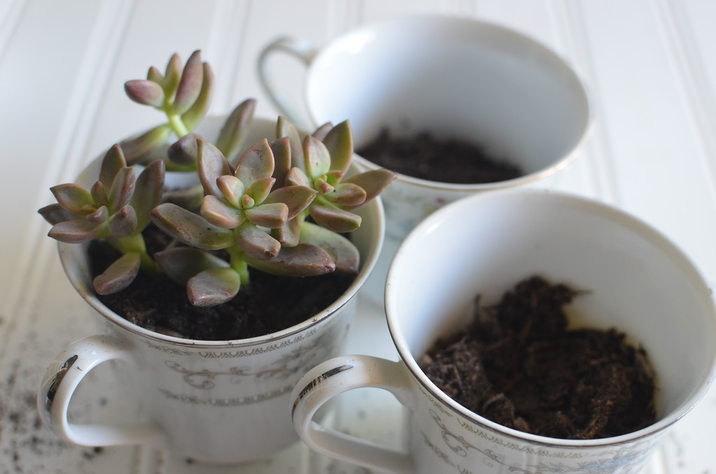 mother's day gift idea diy