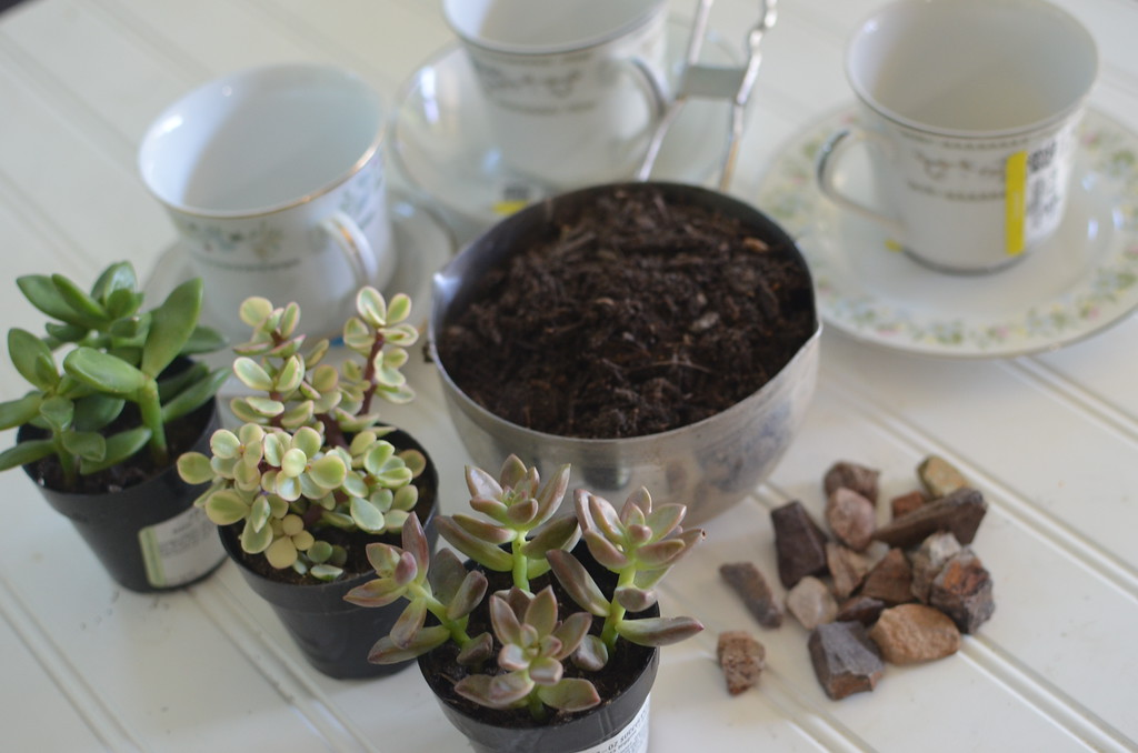 succulent tea cups mother's day diy