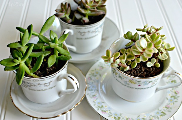 Succulents in tea cups Hip2Save