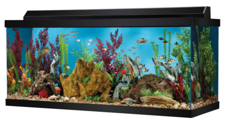 Petsmart 75 Gallon Aquarium Only 149 74 Regularly 234 99 More Hip2save