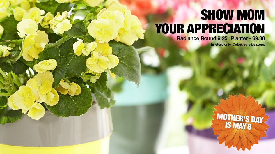 Home Depot: Annuals Planter ONLY $9 88 (+ 2/$10 Hanging