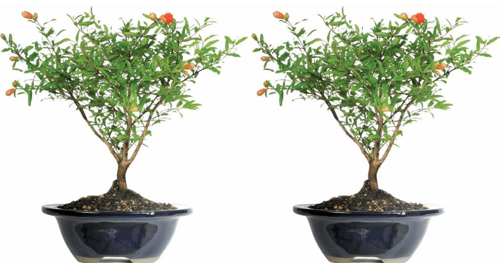 pom-tree-walmart
