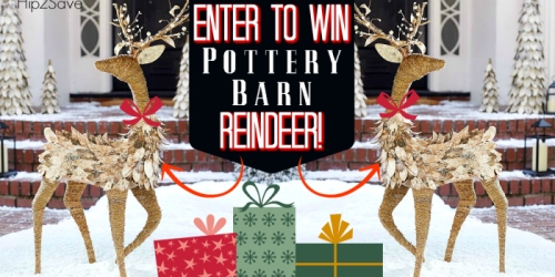 2 Hip2Save Email Subscribers Win Pottery Barn Lit Birch Reindeer ($299 Value)