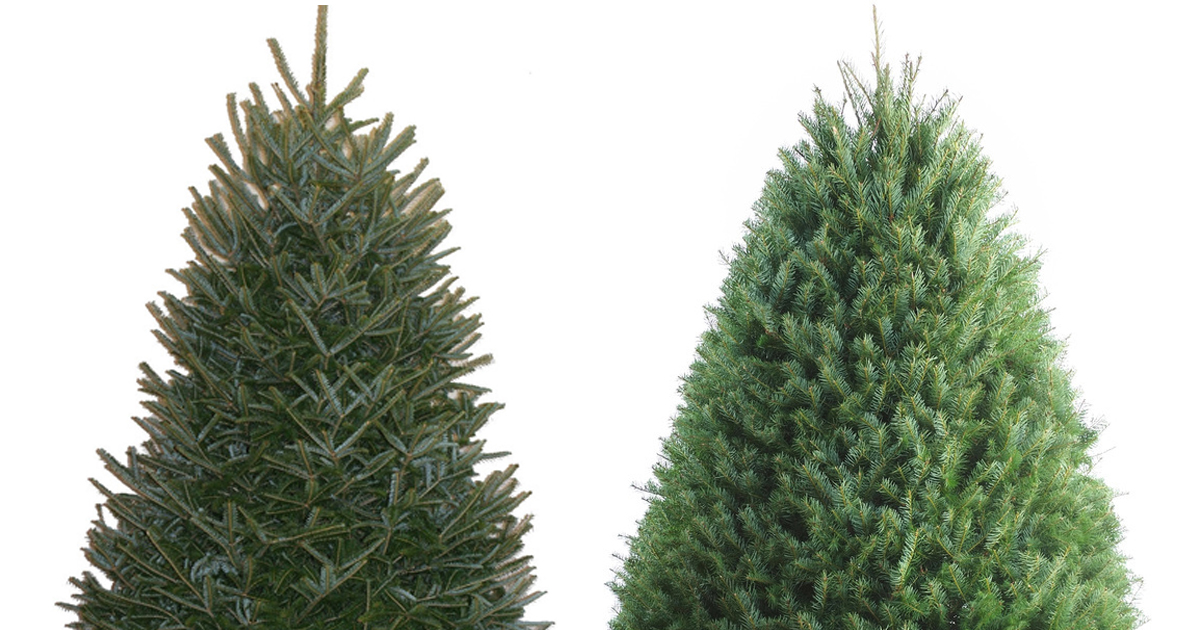 Lowe's: 25% Off Fresh Christmas Trees = 3-5 Foot Fraser