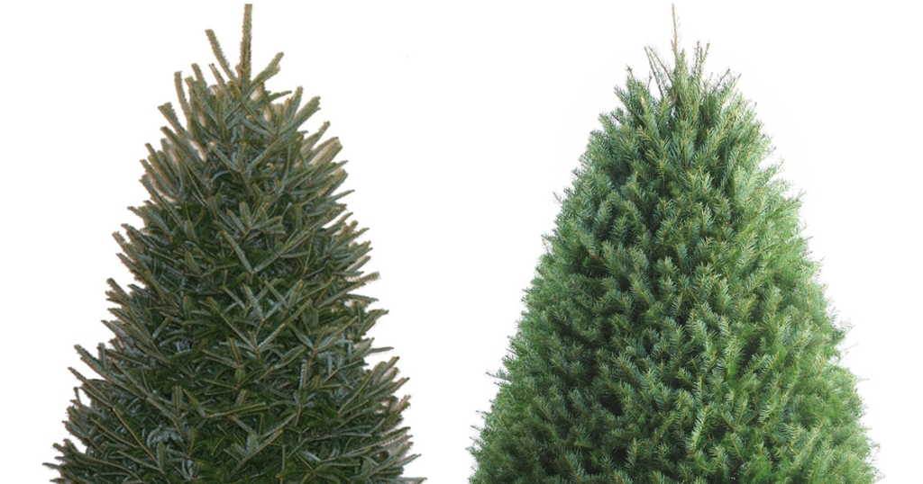 Lowes Fresh Christmas Trees.Lowe S 25 Off Fresh Christmas Trees 3 5 Foot Fraser Fir