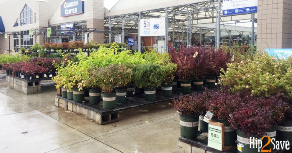 lowes shrubs