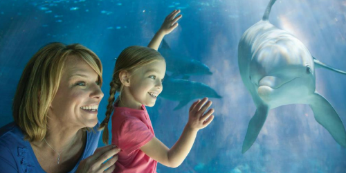 SeaWorld: FREE Unlimited Admission Fun Card + 2 FREE Tickets for Teachers (Select Locations)