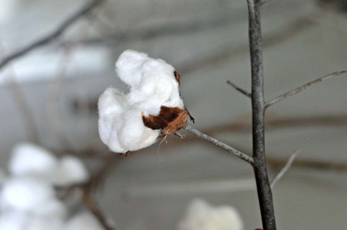 cotton ball glued to a branch with additional bits of cotton plant