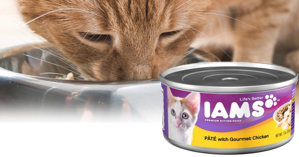 IAMS Pate Canned Cat Food