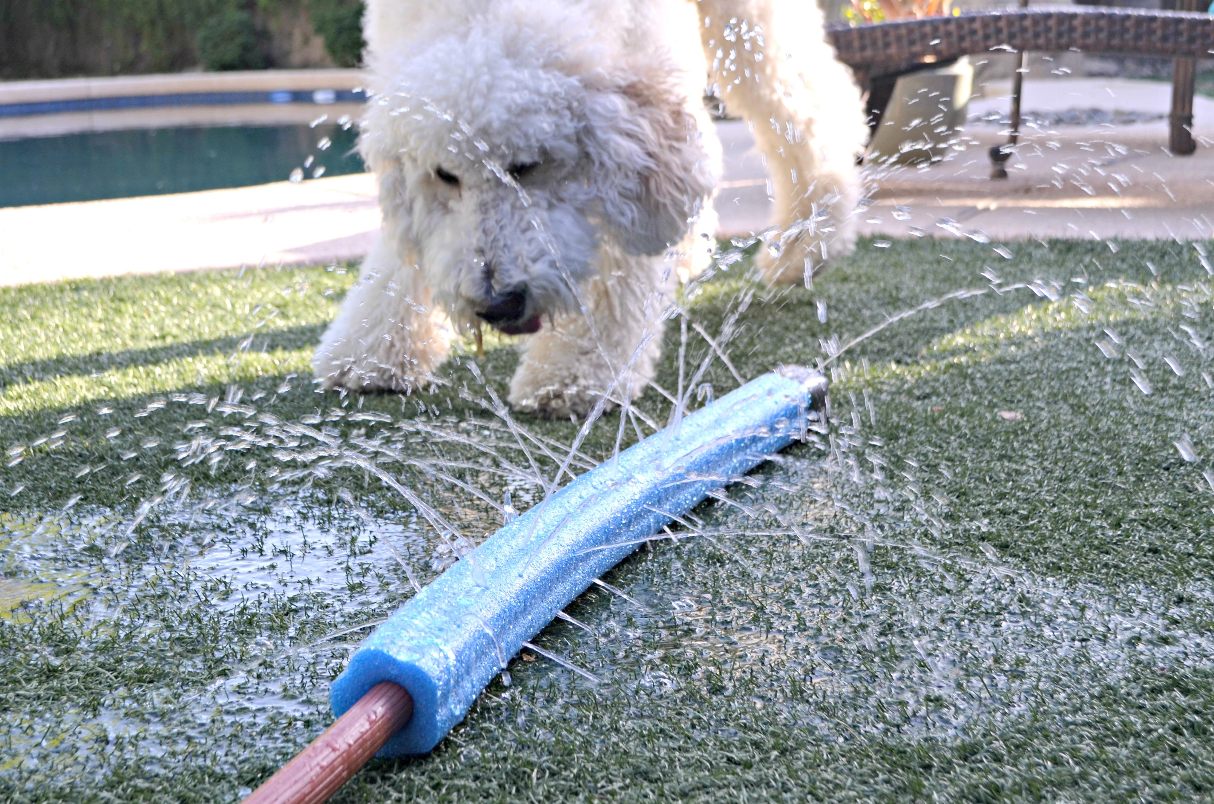 dog playing in summer dollar tree diy sprinkler