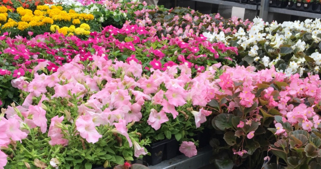 Home Depot Annuals