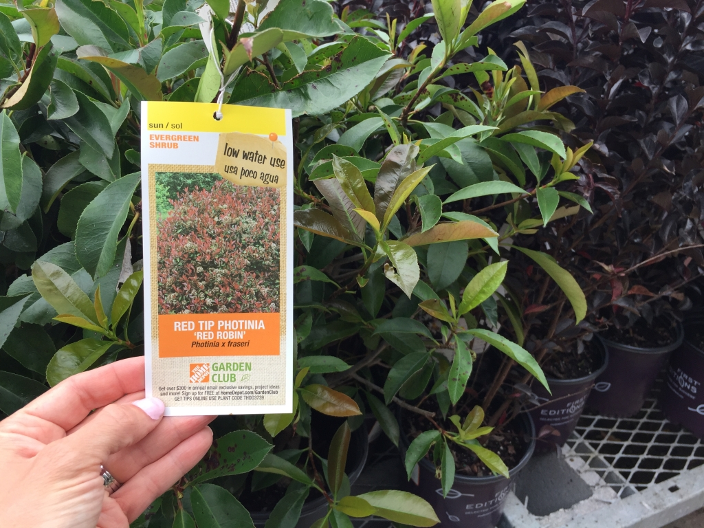 Can T Keep Plants Alive No Worries Since The Home Depot Offers A 1 Year Guarantee On Perennials Trees And Shrubs