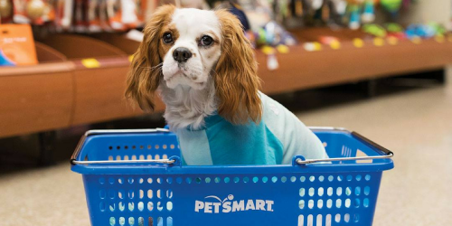 FREE Photo & Pawprint Keepsake at PetSmart on March 21st | Free Doggie Ice Cream for Dog DayCamps