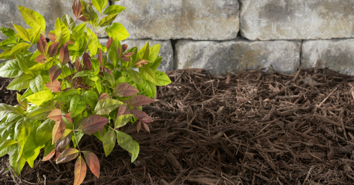 Premium Mulch 2-Cubic Feet Bags as Low as $2 at Lowe's ...