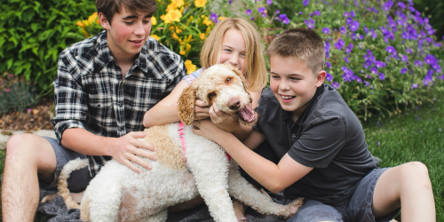 Your Pets will LOVE these Petco Coupons ($20 Off Dog Food, Free Cat Litter & MORE!)