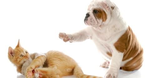 PetSmart: Buy 1 Get 1 FREE Dry Cat & Dog Food Bags
