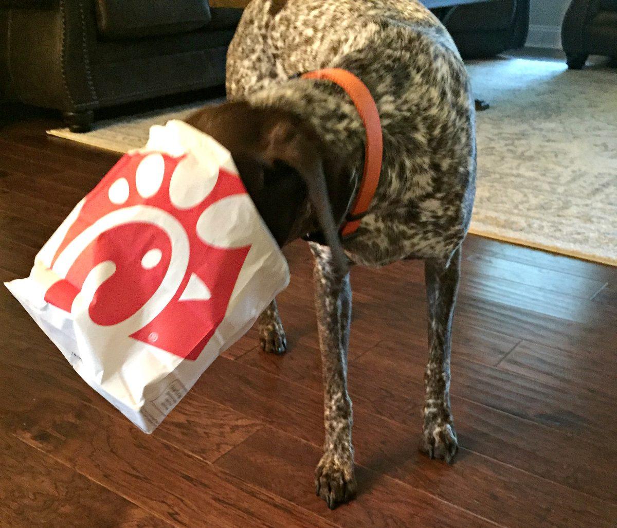 dog going through bag