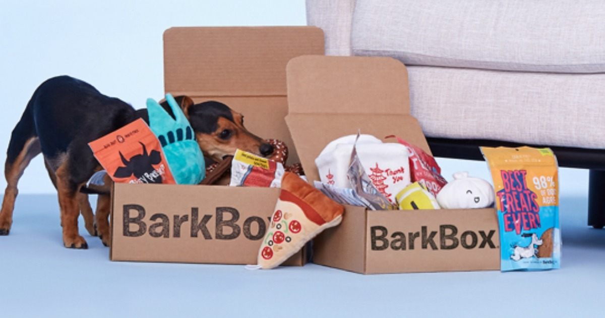 BarkBox box open with a small dog pulling out a chew toy