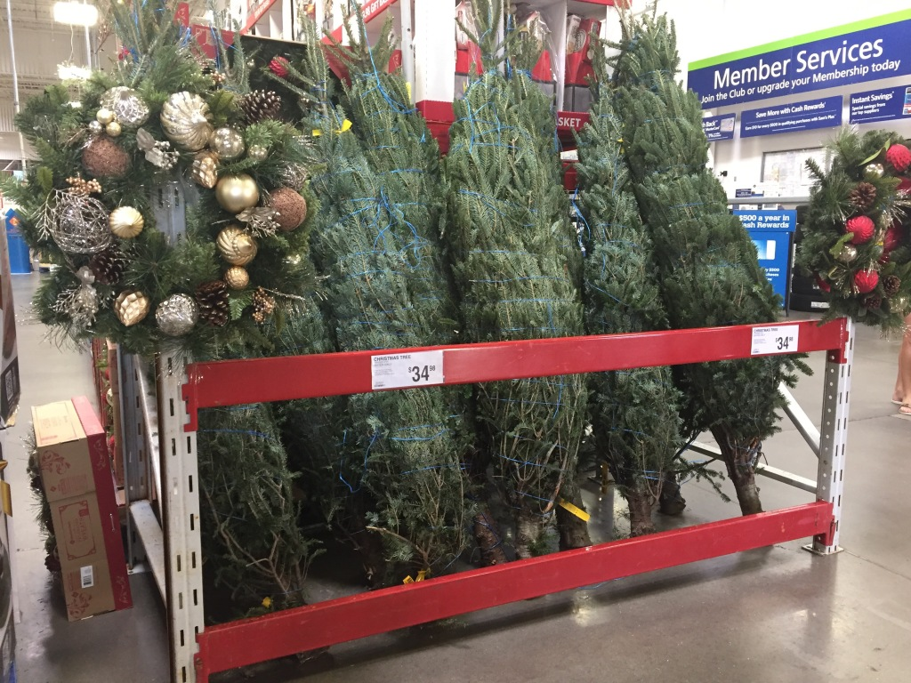real christmas trees only 3498