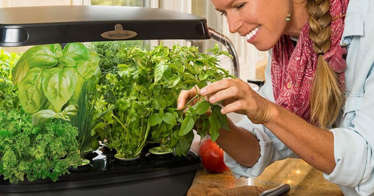 woman tending to her herbs in an Aerogarden