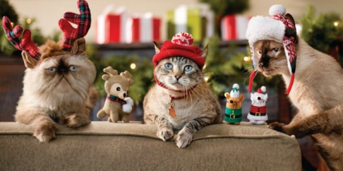 60% Off Cat & Dog Toys, Beds & Apparel at Petco (Today ONLY)