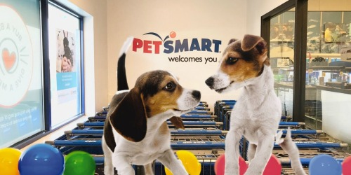 FREE Doggie Ice Cream & Photo w/ Dog DayCamp Session at PetSmart