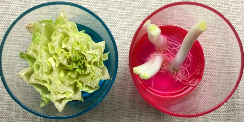 9 Simple Ways to Save on Fresh Fruits and Vegetables