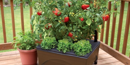Earth Resin Raised Garden Bed UNDER $20 Shipped (Perfect for Porches & Patios)