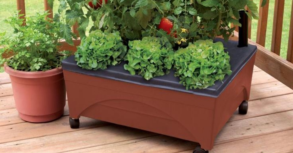 Home Depot City Pickers Raised Garden Bed Grow Box Only 19 98