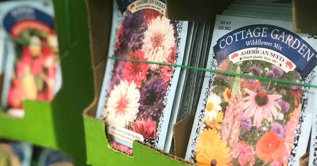 dollar tree flower seeds