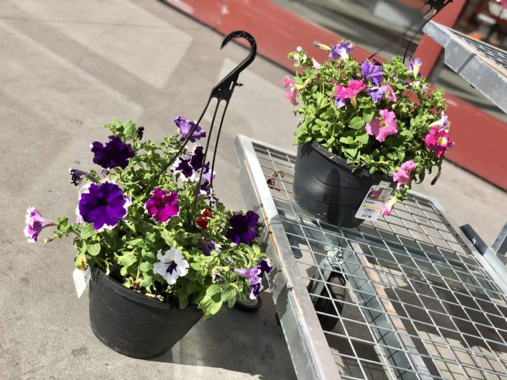 Hanging baskets with flowers at Home Depot