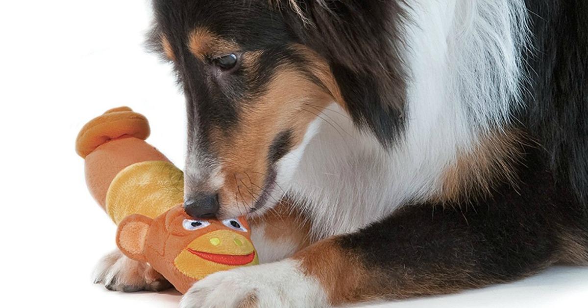 Senior Dog Food Recipes
