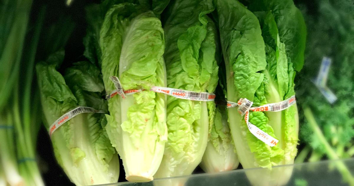romaine lettuce e coli outbreak – lettuce closeup