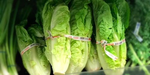 Throw Away All Your Romaine Lettuce, CDC Warns U.S. Consumers