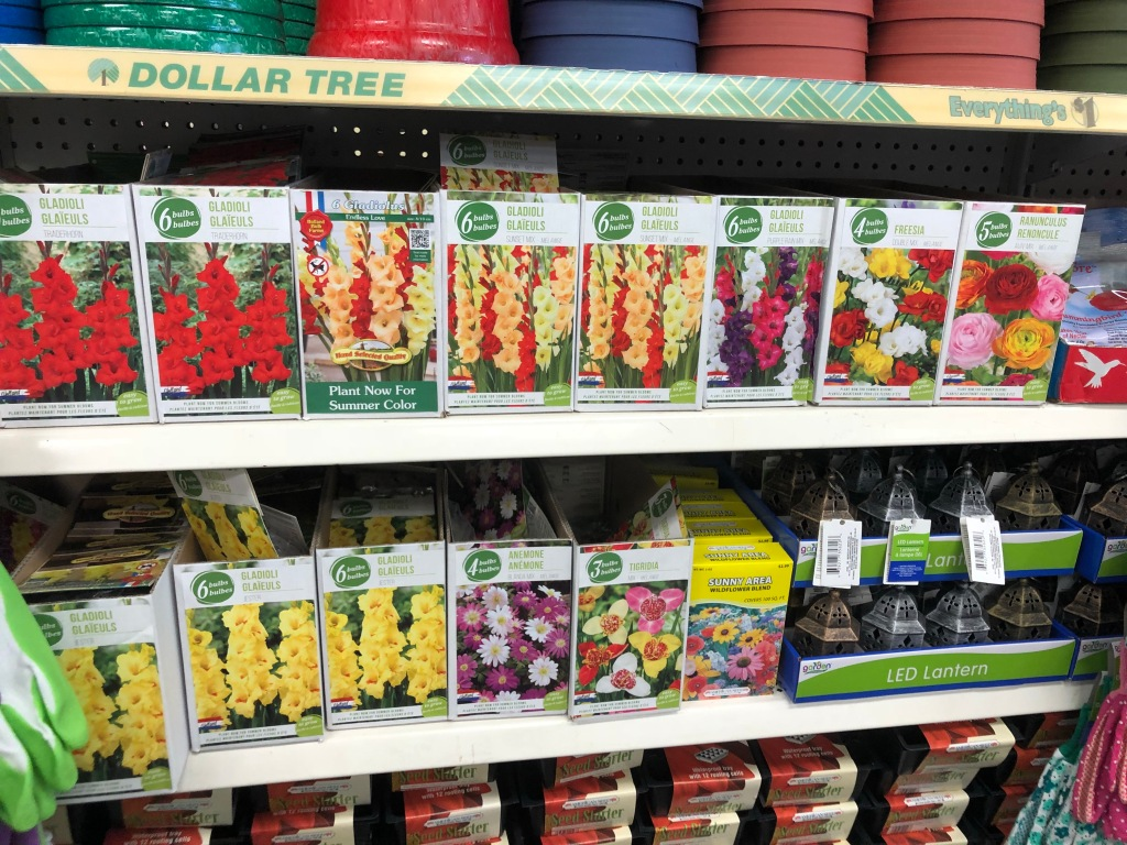 Seed Packets Dollar Tree