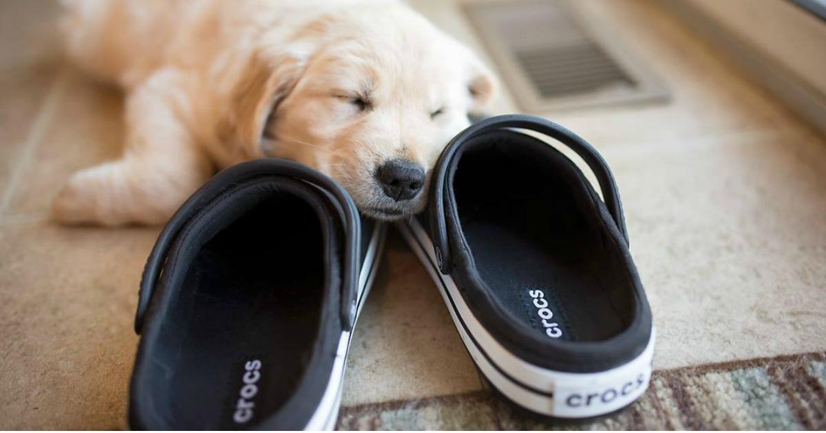 crocs brand deals – puppy sleeping on Crocs shoes