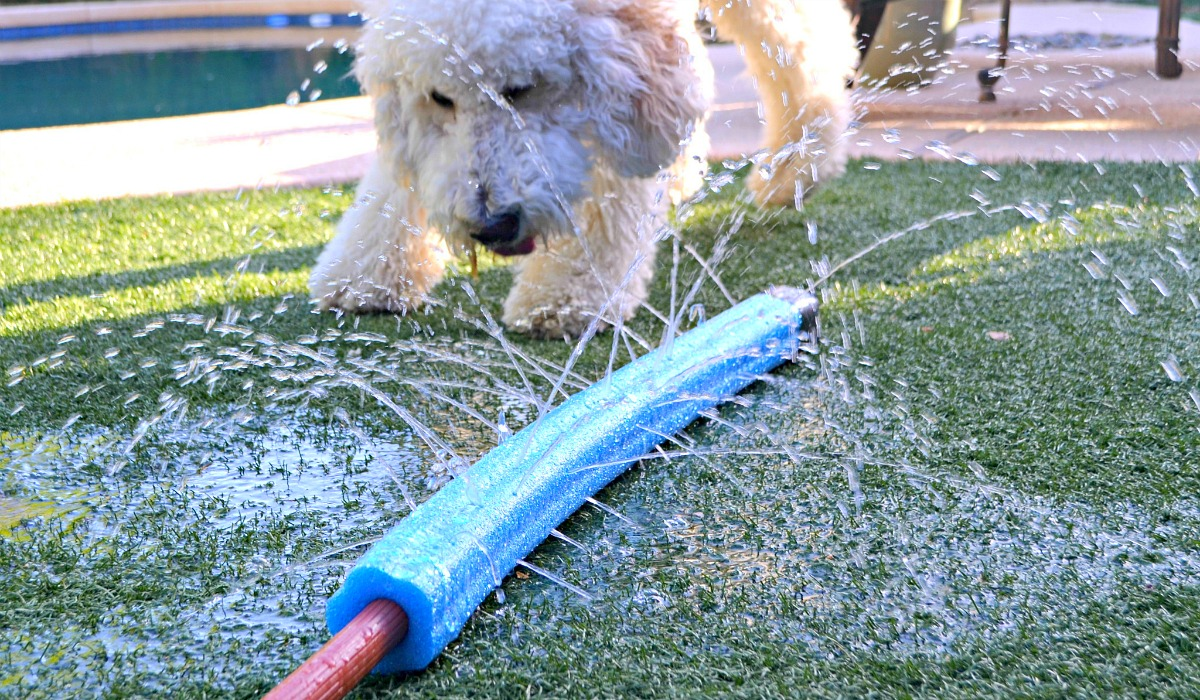 dollar tree pool supplies and fun hacks — pool noodle sprinkler hack