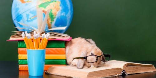 Calling All Teachers! Possibly Add Pets to Your Classroom for FREE