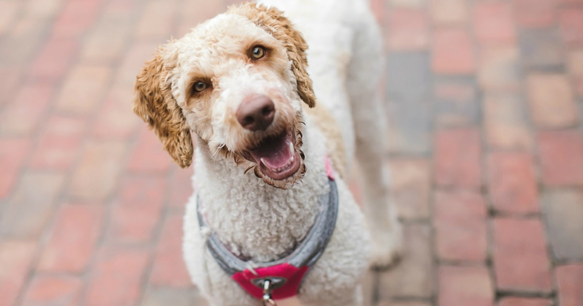national preparedness month disaster tips – Never leave your pets during a national crisis