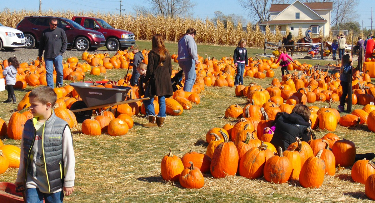 places for free fun fall activities — people at fall festival looking at pumpkins