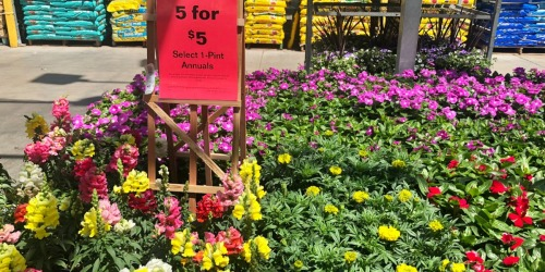 1-Pint Annuals Only $1 Each at Lowe's + More