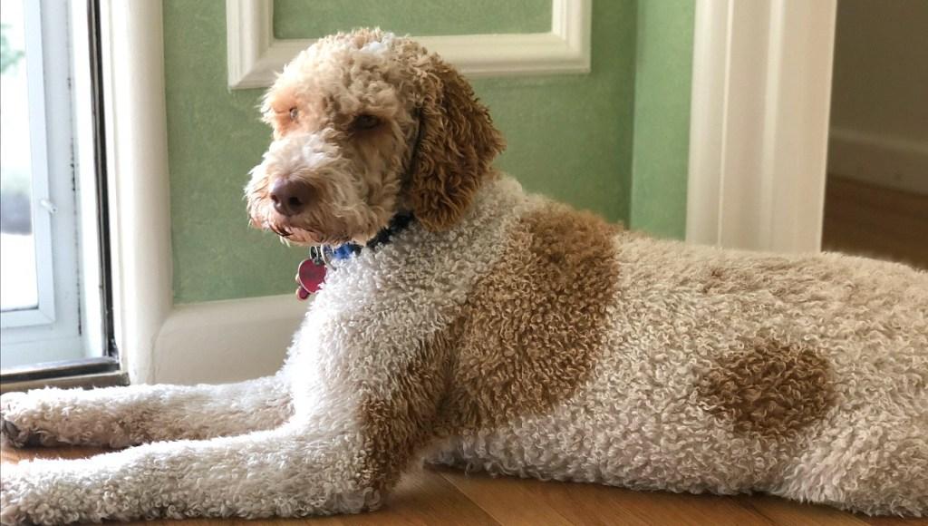 yoli-at-home-hip2savecollin's dog yogi enjoying the new home