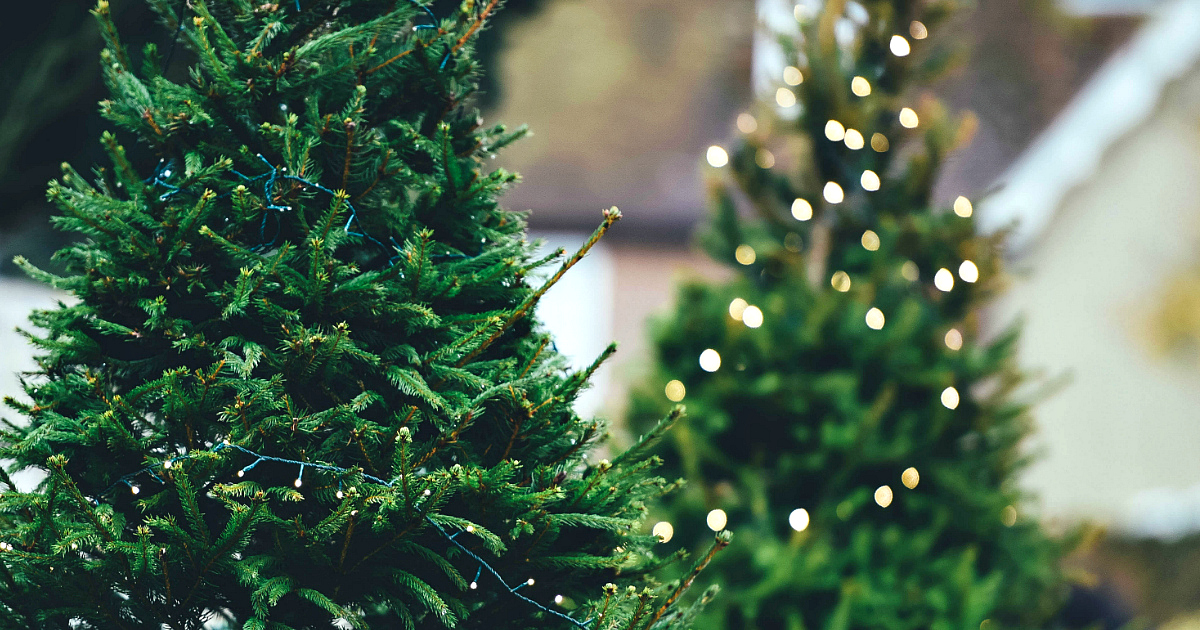 Amazon selling live Christmas Trees this holiday season like these decorated trees