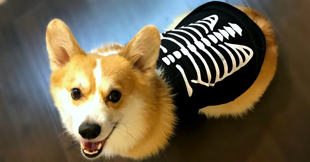 Halloween Pet Costumes at JCPenney