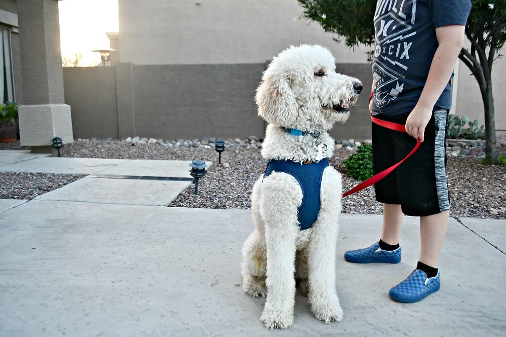 boy walking a dog on a leash