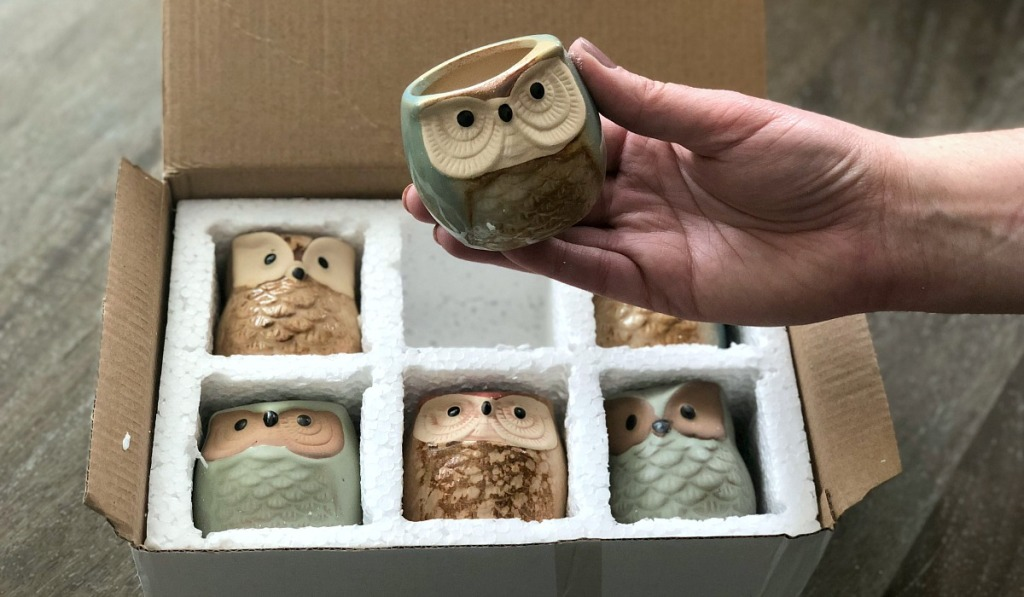 gift guide for homebody — mini owl succulent planters