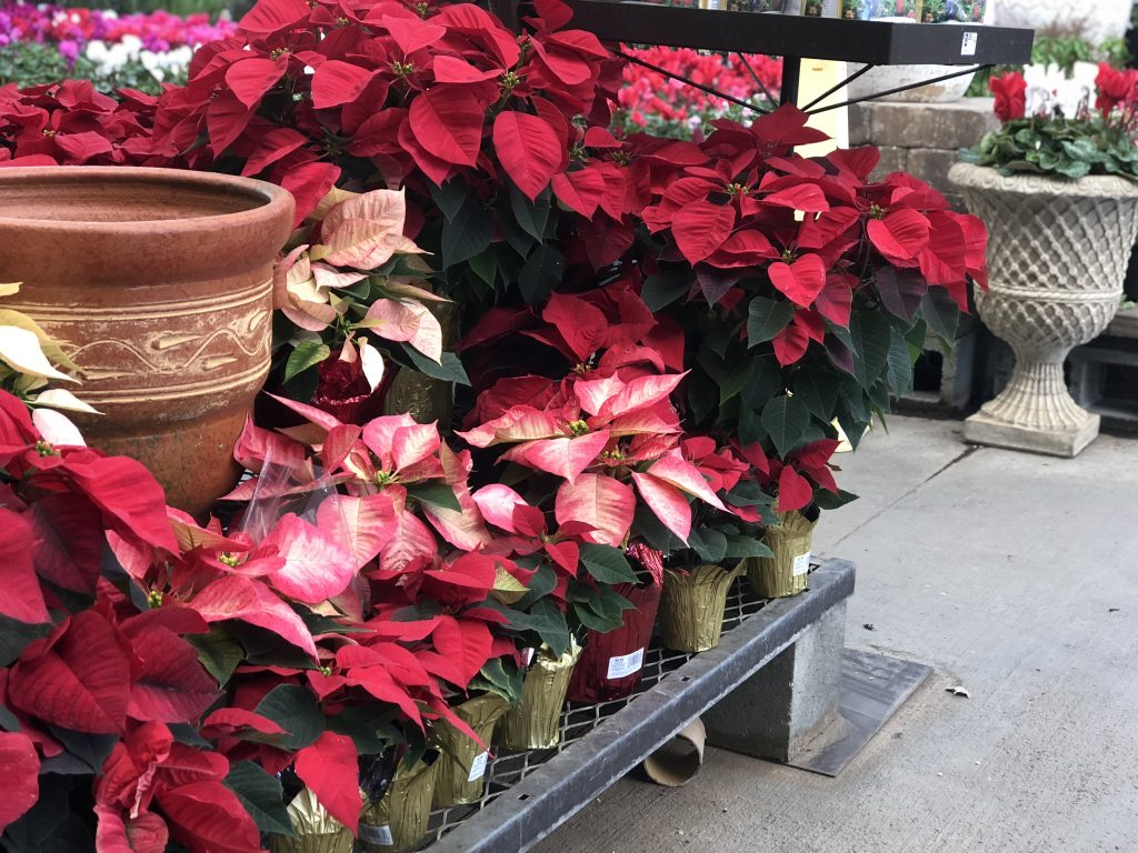 Lowe S Black Friday 2020 Ad 50 Poinsettias 50 Off Tools Hip2save