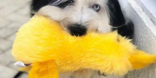 Amazon: Duckworth Duck 15″ Large Plush Dog Toy Just $5 Shipped + More