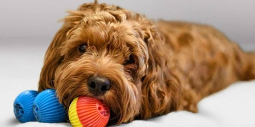 Pet Qwerks Babble Balls Only $4.79 on Zulily